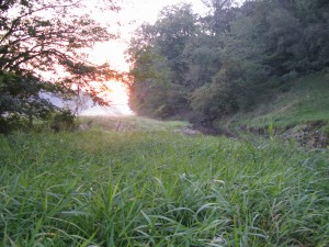Walking up a spring creek at dawn does resembles what I imagine heaven to look like.